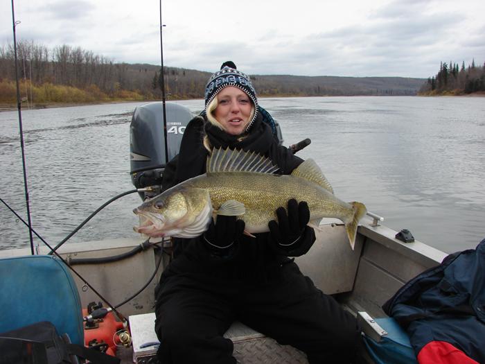 12 lb Walleye
